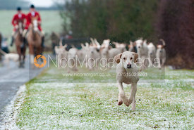 Quorn foxhound leads the pack