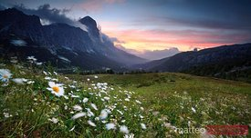 Sunrise over daisies meadow in the italian alps Dolomites Italy