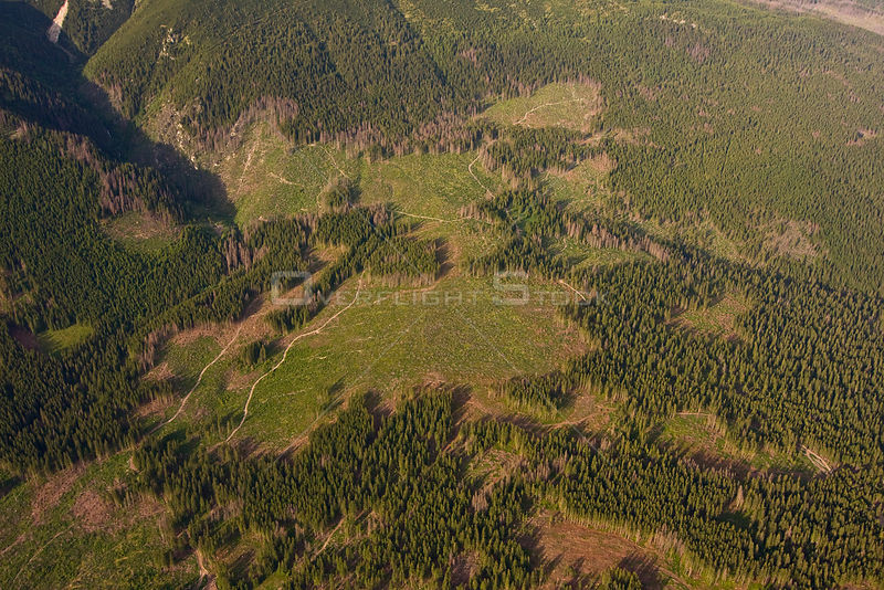 Aerial view of deforested area in spruce forest on the foothills of Mount Krivàn, High Tatras, Carpathian Mountains, Slovakia, June 2009
