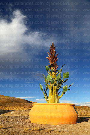 Giant quinoa plant monument just outside Salinas de Garci Mendoza, Oruro Department, Bolivia