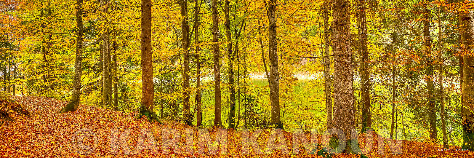 Panorama - Forest with autumn colors - Gruyère