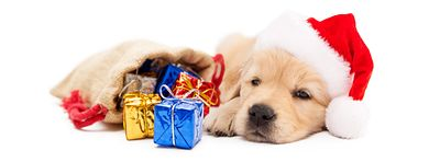 Sleepy Puppy With Christmas Gifts - Horizontal Banner