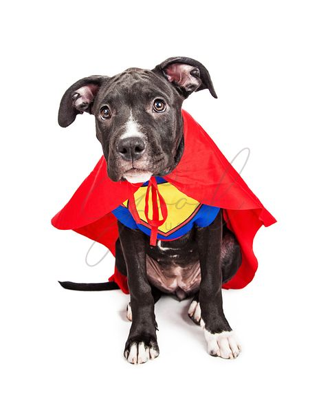 Cute Superhero Puppy Dog