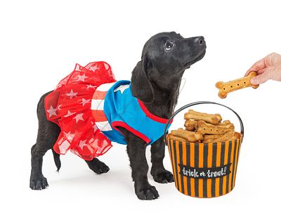 Puppy Trick-Or-Treating for Biscuits