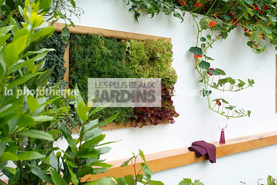 garden designer, Mini potager, Mini Vegetable garden, Salad, Tropaeolum majus, Foliage wall, Green wall, Vegetation wall, Wall decoration