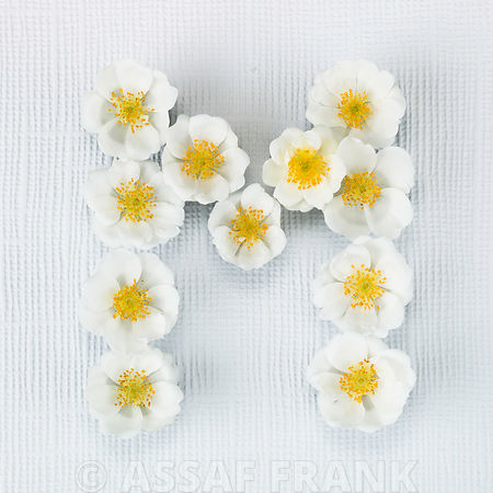 The letter M written in white Roses