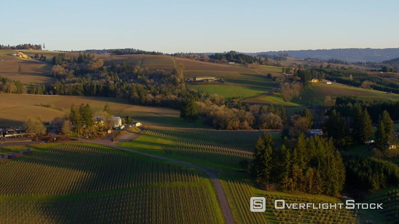 Aerial view of vineyards and farm land near Dayton, Oregon