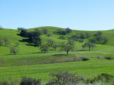 SB_Wine_Country_Mar10_027