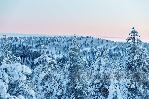 Forest in polar night