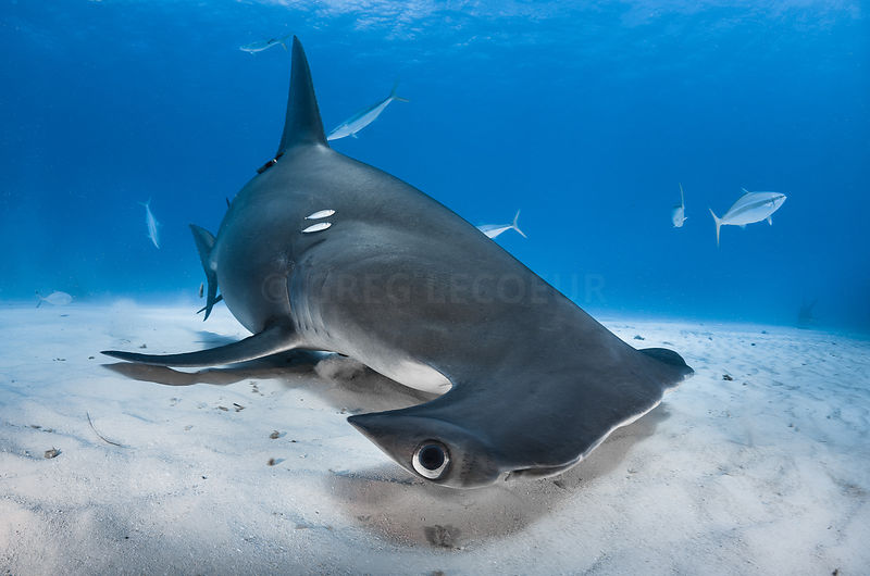 Requin photos