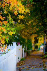 Fall colors on the Street, Nevada City #2