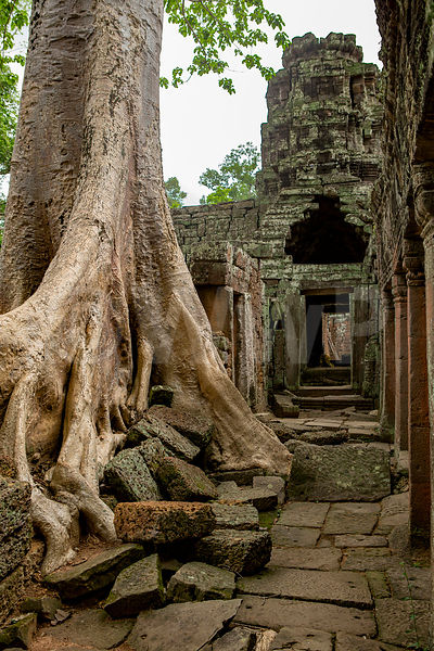 WW_P5998-Cambodia-Angkor-Wat-Temple-Tree-on-ruins
