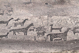 Detail of geoglyphs of llamas / camelids at Tiliviche , Region I , Chile