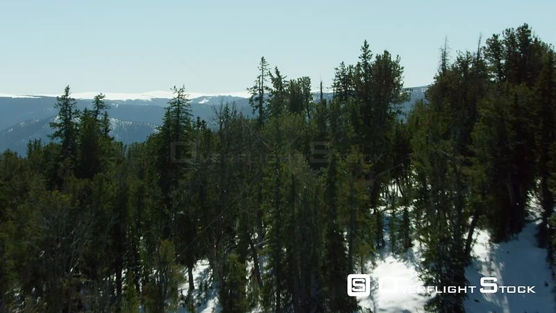 Dense forests cover the norhtern foothills of the Beartooth mountain range in southern Montana