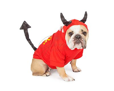 Bulldog Wearing Halloween Devil Costume