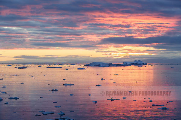 Sunset on the icebergs of the Disko Bay
