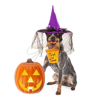 Halloween Witch Dog With Pumpkin