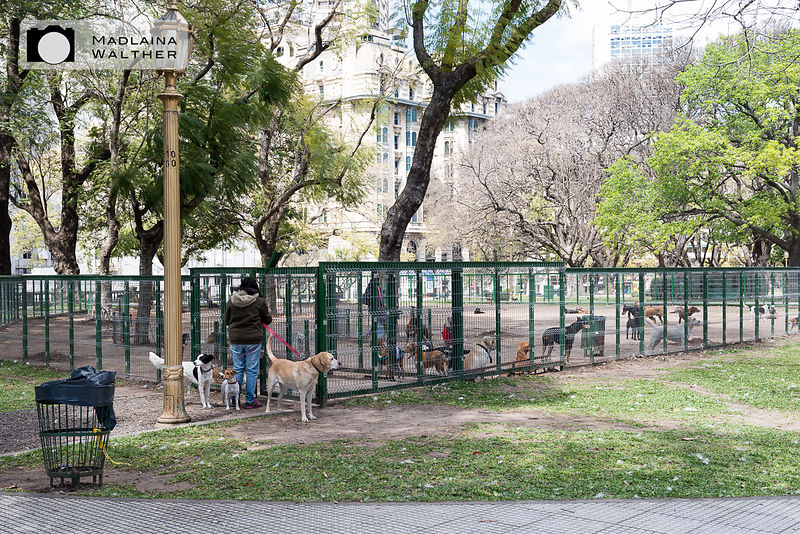 That's what Porteños (people living in Buenos Aires) do with their dogs while working: bring them to the dog sitter but as they can't walk all the dogs at the same time...
