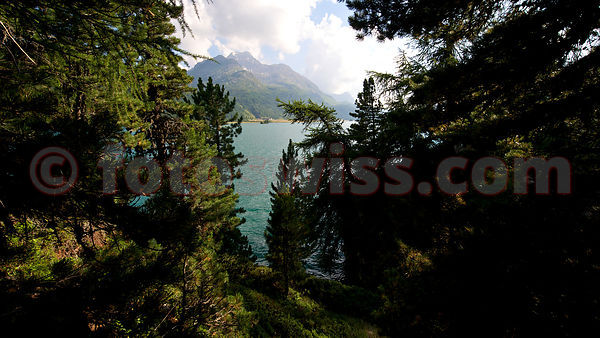 Halbinsel Chaste in Sils Maria