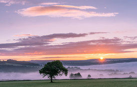 Valley mist sunrise