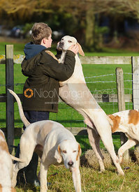 A young supporter is greeted by a Cottesmore foxhound - Belton 24/12