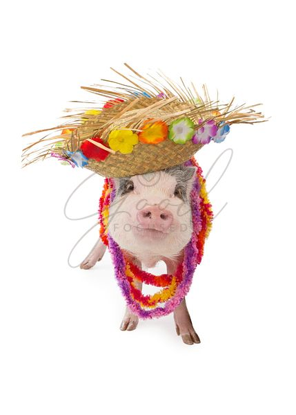 Hawaiian Pig Wearing Hat and Lei