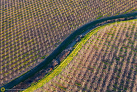Walnut Orchards from the Air #6