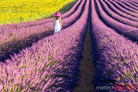 Woman walking in a lavender field, Provence, France