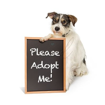 Terrier Dog Holding Adopt Me Sign