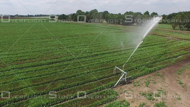 Crop Sprinker Irrigation England