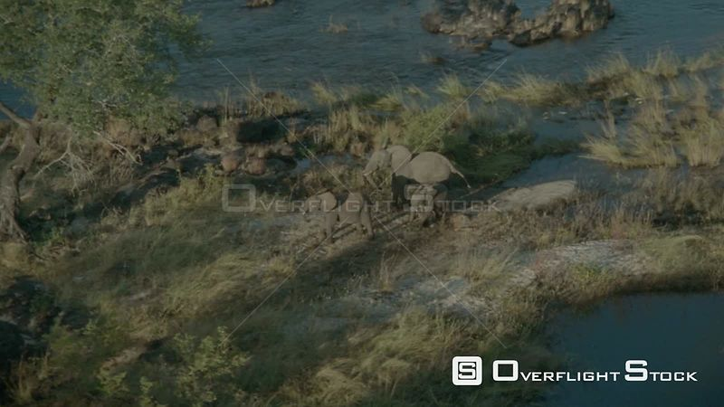 Aerial zoom out three elephants standing on riverbank with river in background, move off into bush Botswana