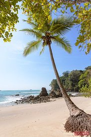 Palm tree and beach, Manuel Antonio national park, Costa Rica