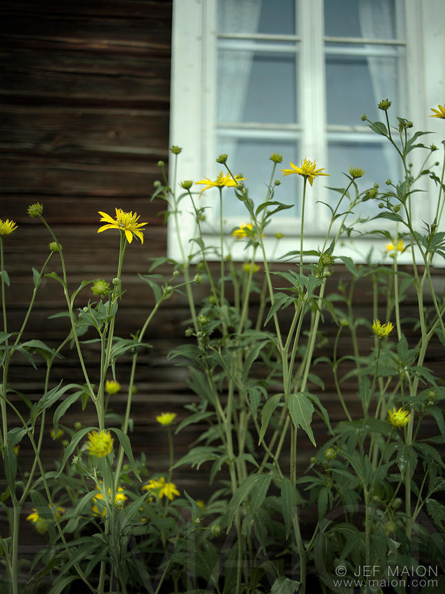 Flowers and old traditional timber house