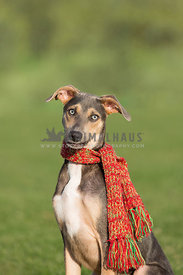 dog in park with holiday scarf