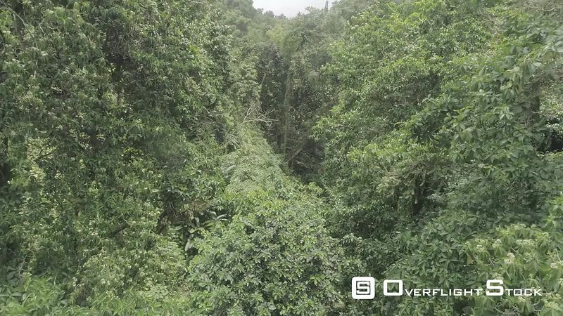 Aerial view of caribbean tropical forest, filmed by drone, Martinique
