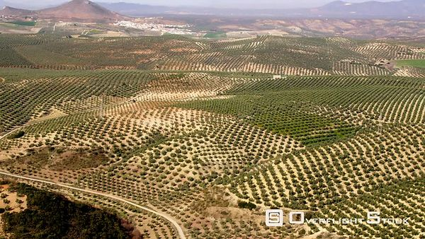 WS AERIAL VIEW OF OLIVE PLANTATIONS WITH VILLAGES IN BACKGROUND SPAIN