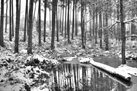Winter Forest (Mono)
