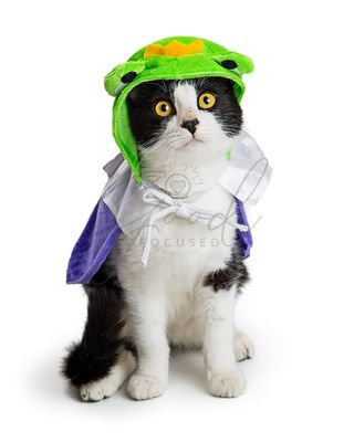 Kitten Wearing Halloween Frog Prince Costume