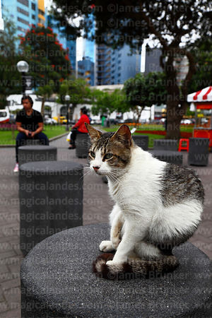 Cat on seat in Parque Kennedy, Miraflores, Lima, Peru