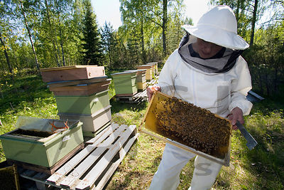 Beekeeper on her apiary