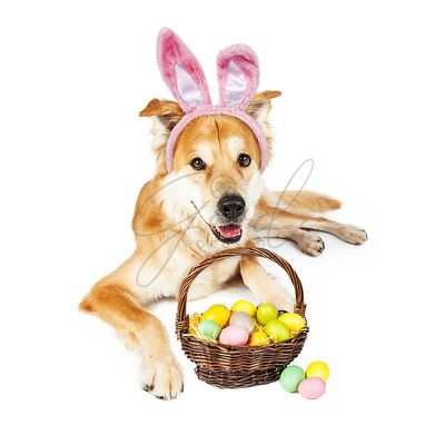 Cute Easter Bunny Golden Dog With Basket