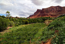 Vineyards near Villa Abecia village, Chuquisaca Department, Bolivia