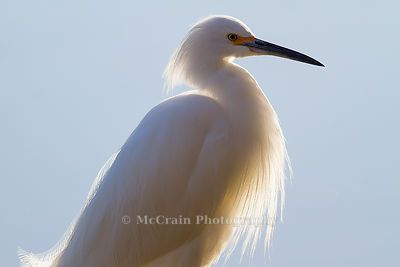 Herons, Cranes and Egrets photos
