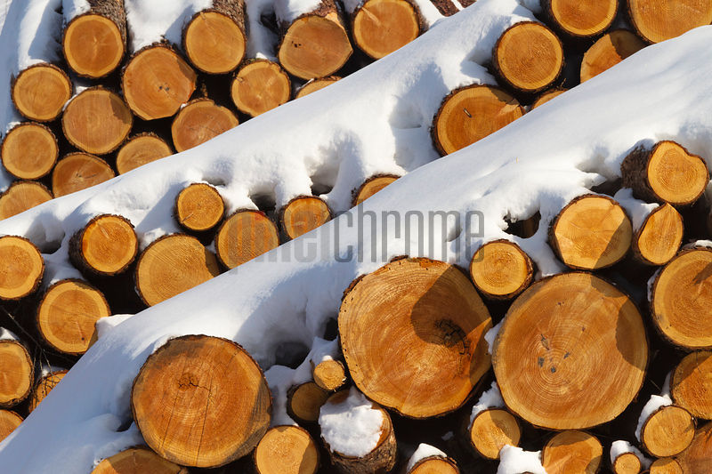 Pile of Logged Trees Stacked up in Snowy Landscape