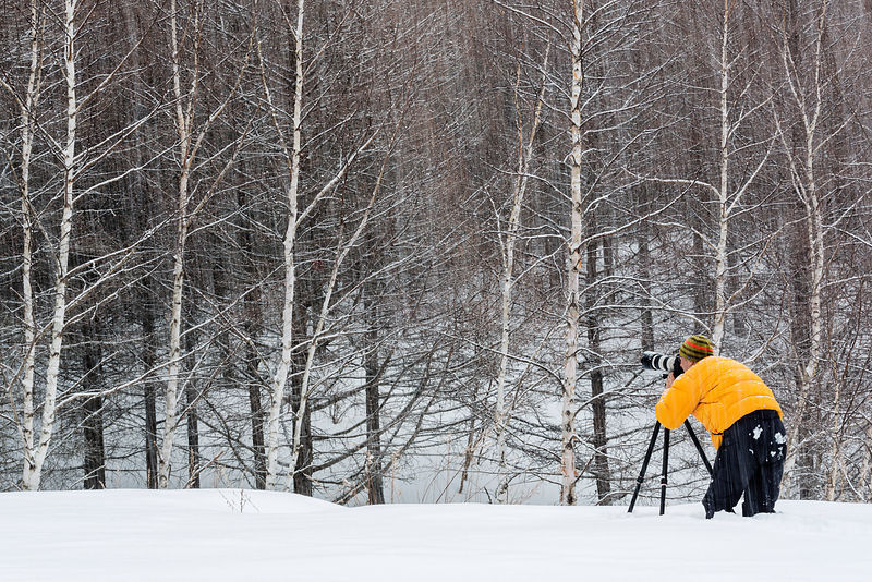 Photographer in Birch Forest and Snowstorm