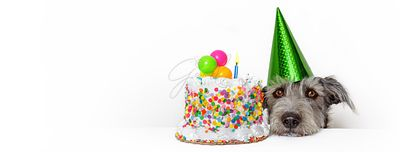 Dog With Birthday Cake Web Banner