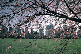 Central Park and skyscrapers in spring