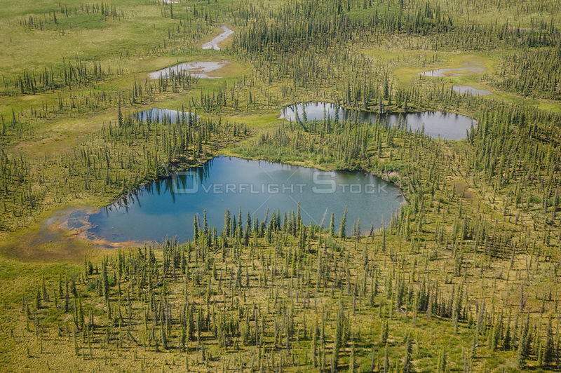 Aerial view of Taiga ponds and Spruce trees (Picea abies) in the boreal lowlands of the Yukon Flats National Wildlife Refuge. Alaska, USA, June.
