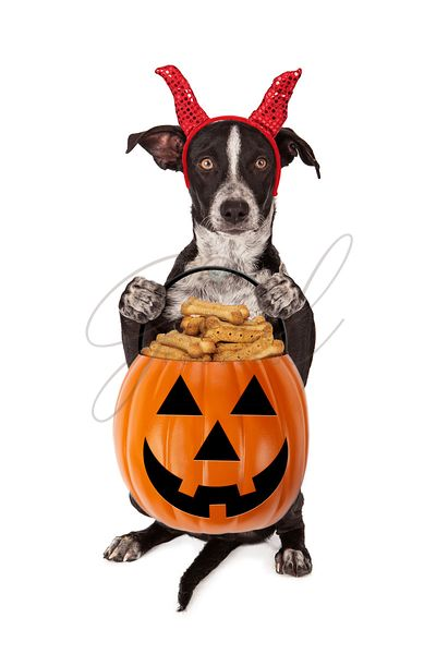 Halloween Puppy Trick-or-Treat