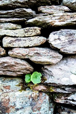 Detail of Wall, Staigue Ring Fort- Ring of Kerry, Ireland